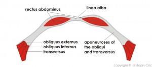 Abdominoplasty-drafts-6