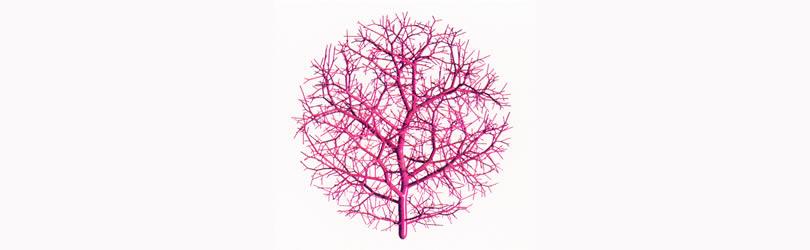 kapilarna mreza